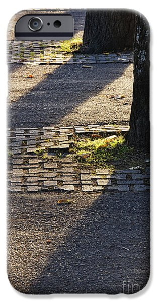 Asphalt iPhone Cases - Backlit Tree Shadows iPhone Case by Jeremy Woodhouse