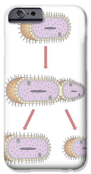 Bacterial Replication, Artwork iPhone Case by Peter Gardiner