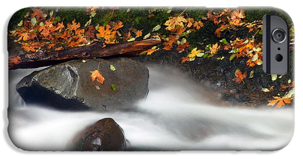 Maple Season iPhone Cases - Balance of the Seasons iPhone Case by Mike  Dawson