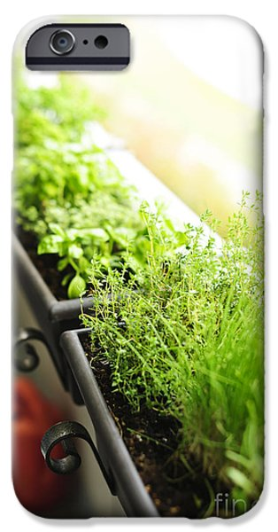 Balcony Photographs iPhone Cases - Balcony herb garden iPhone Case by Elena Elisseeva