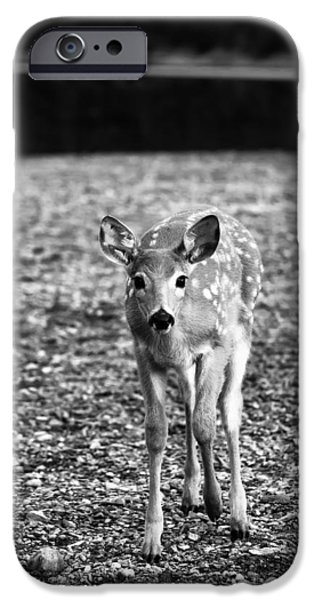 Black And White Photographs iPhone Cases - Bambi in Black and White iPhone Case by Sebastian Musial