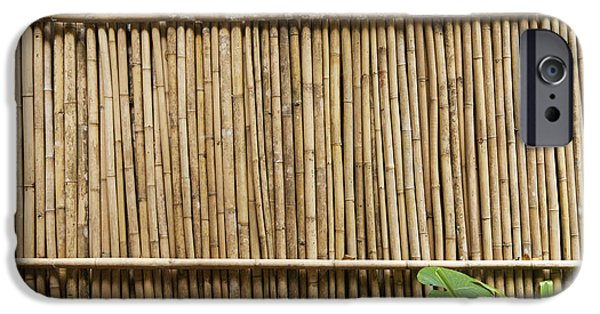 Bamboo Fence iPhone Cases - Bamboo Fence iPhone Case by Don Mason