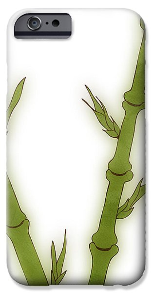 Botanic Illustration iPhone Cases - Bamboo iPhone Case by Frank Tschakert