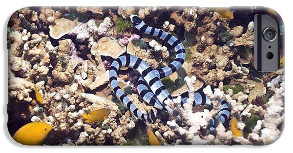 Serpent iPhone Cases - Banded Sea Krait iPhone Case by Georgette Douwma