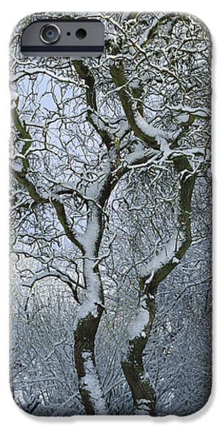 Winter Storm iPhone Cases - Bare, Snow-covered Tree In Winter iPhone Case by Cyril Ruoso