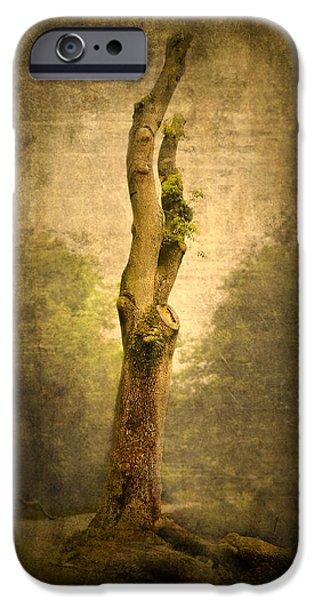 Garden Scene Digital iPhone Cases - Bare Tree iPhone Case by Svetlana Sewell