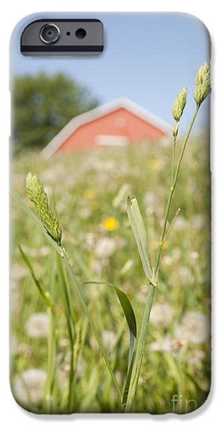 Barn On a Grass Slope iPhone Case by Shannon Fagan