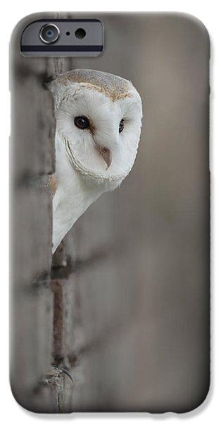 Barn Owl iPhone Case by Andy Astbury