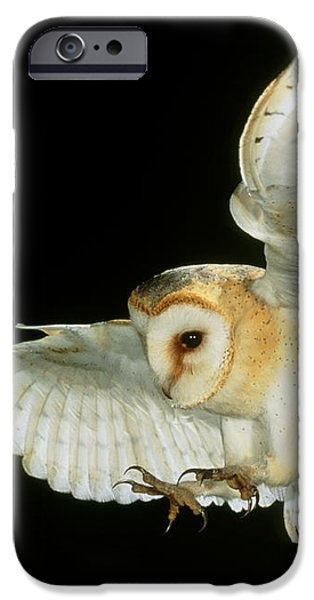 Barn Owl iPhone Case by Andy Harmer and SPL and Photo Researchers