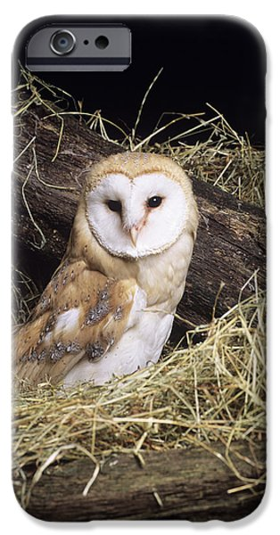 Recently Sold -  - Fauna iPhone Cases - Barn Owl iPhone Case by David Aubrey