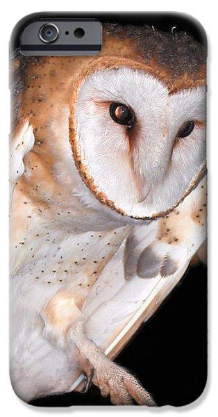 Jean Noren iPhone Cases - Barn owl iPhone Case by Jean Noren