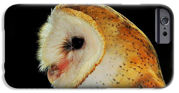 Wildlife Imagery iPhone Cases - Barn Owl Profile iPhone Case by Ramona Johnston