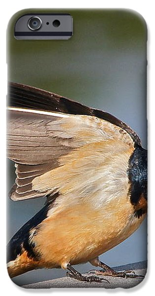 Barn Swallow iPhone Case by Byron Varvarigos