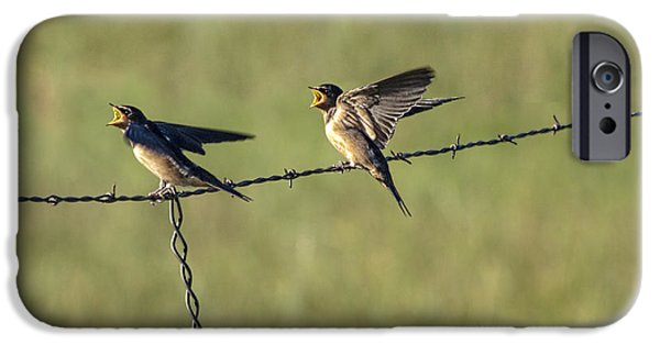 Barn Swallow iPhone Cases - Barn Swallow No.3742 iPhone Case by Randall Nyhof