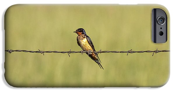Barn Swallow iPhone Cases - Barn Swallow No.3758 iPhone Case by Randall Nyhof