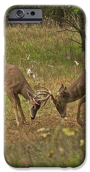 Battling Whitetails 0102 iPhone Case by Michael Peychich