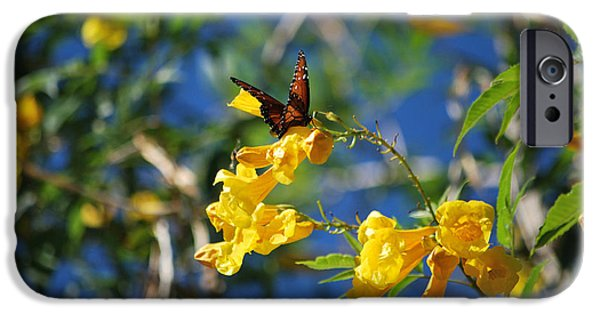 Bloosom iPhone Cases - Beautiful Butterfly iPhone Case by Donna Van Vlack