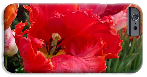 Phillie iPhone Cases - Beautiful From Inside and Out - Parrot Tulips in Philadelphia iPhone Case by Mother Nature