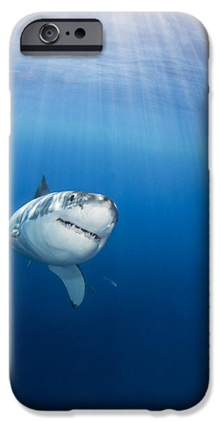 Fish Photographs iPhone Cases - Beautiful Great White iPhone Case by Dave Fleetham - Printscapes