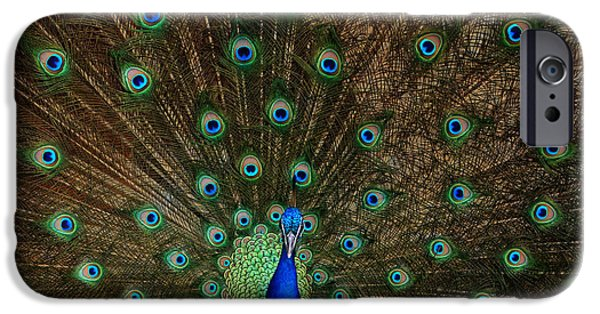 Bird Photographs iPhone Cases - Beautiful Peacock iPhone Case by Larry Marshall