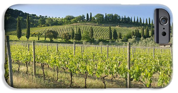 Agriculture iPhone Cases - Beautiful Vineyard iPhone Case by Rob Tilley