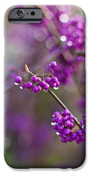 Berry iPhone Cases - Beauty Berry Explosion iPhone Case by Mike Reid