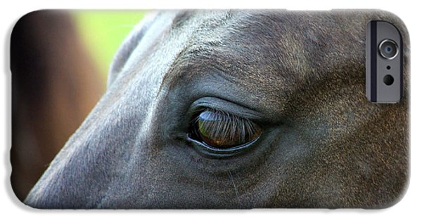 American Quarter Horse iPhone Cases - Beauty is in the Eye iPhone Case by Karon Melillo DeVega