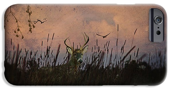 Hayfield iPhone Cases - Bedding Down For Evening iPhone Case by Lianne Schneider