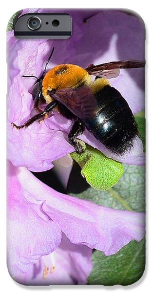 Bee on Azalea Bloom iPhone Case by Lisa  Phillips