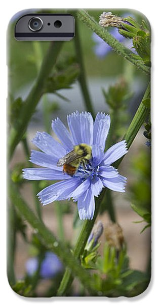 Bee on Romaine Flower iPhone Case by Donna Munro