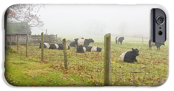 Barbed Wire Fences iPhone Cases - Belted Galloway Cows Farm Rockport Maine Photograph iPhone Case by Keith Webber Jr
