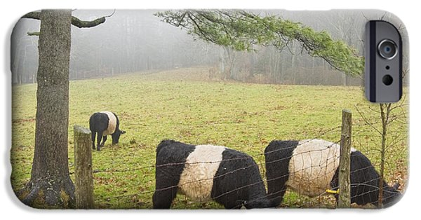 Barbed Wire Fences iPhone Cases - Belted Galloway Cows On Farm In Rockport Maine Photograph iPhone Case by Keith Webber Jr