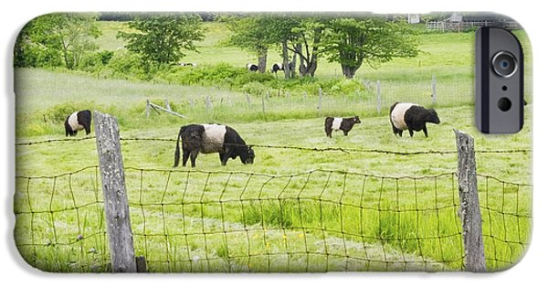 Barbed Wire Fences iPhone Cases - Belted Galloway Cows On  Farm Rockport Maine Photo iPhone Case by Keith Webber Jr