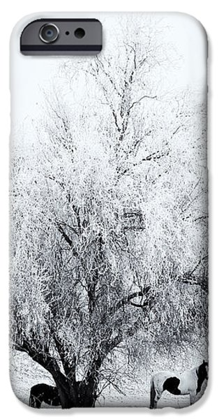 Beneath a Frosty Canopy iPhone Case by Mike  Dawson