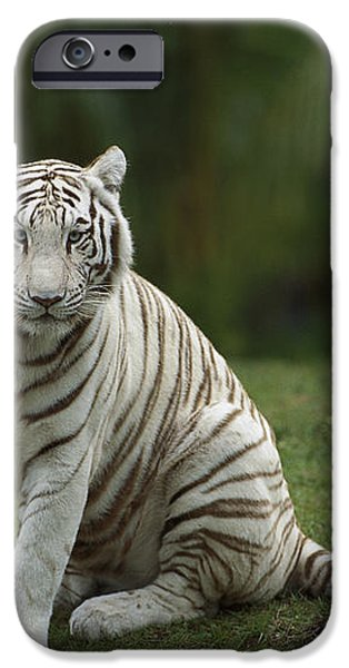 Bengal Tiger Panthera Tigris Tigris iPhone Case by Konrad Wothe