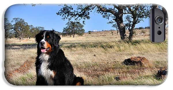 Recently Sold -  - Black Dog iPhone Cases - Bernese Mountain Dog in California Chaparral iPhone Case by Gary Whitton