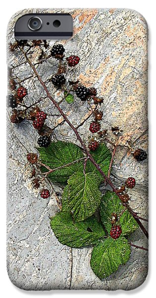 Berry Pyrography iPhone Cases - Berries on the Rock iPhone Case by Ben Freeman