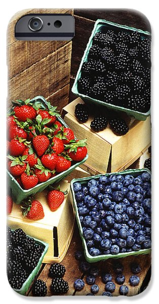 Black Berries iPhone Cases - Berries iPhone Case by Photo Researchers