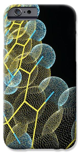 Molecular Graphic iPhone Cases - Beta Carotene Molecule iPhone Case by Pasieka