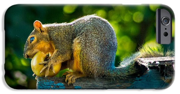 Fox Squirrel iPhone Cases - Big Apple  iPhone Case by Robert Bales