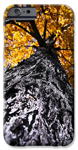 Autumn iPhone Cases - Big autumn tree in fall park iPhone Case by Elena Elisseeva