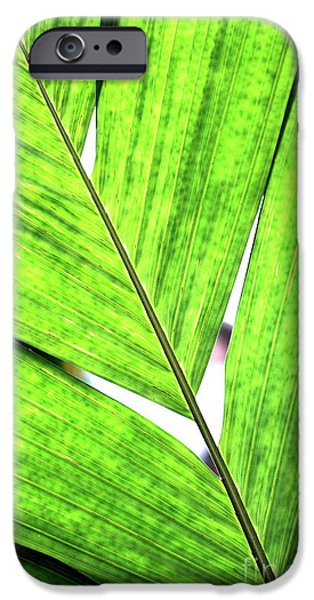 Big Green Leaf . 7D5763 iPhone Case by Wingsdomain Art and Photography