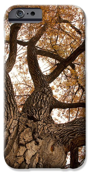 Big Tree iPhone Case by James BO  Insogna