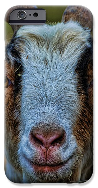Billy Goat iPhone Case by Paul Ward