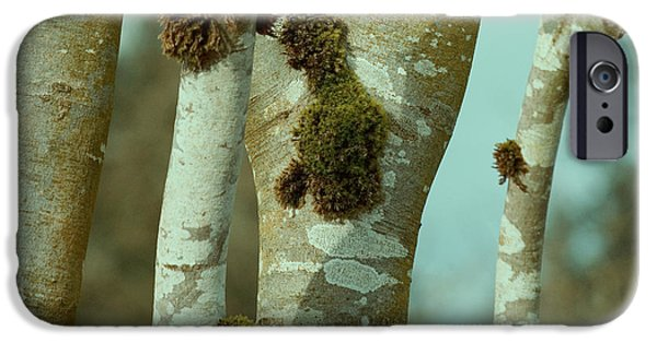 Winter Trees Photographs iPhone Cases - Birch iPhone Case by Bonnie Bruno