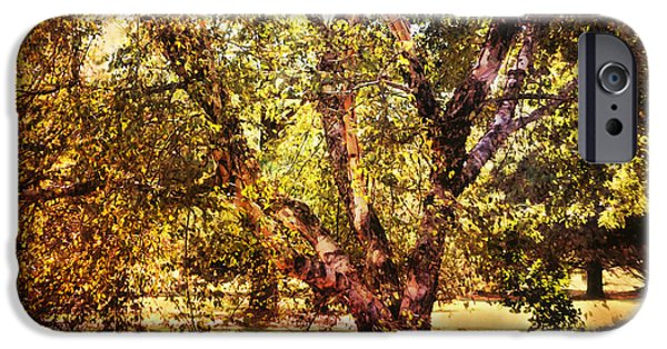 Birch Tree iPhone Case by Jai Johnson