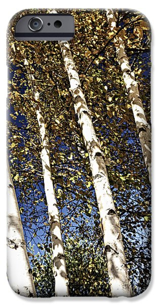 Birch Tree iPhone Cases - Birch trees in fall iPhone Case by Elena Elisseeva