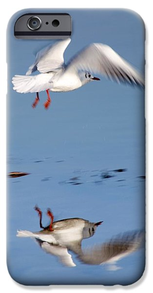 Flying Seagull iPhone Cases - Bird Landing iPhone Case by John Short