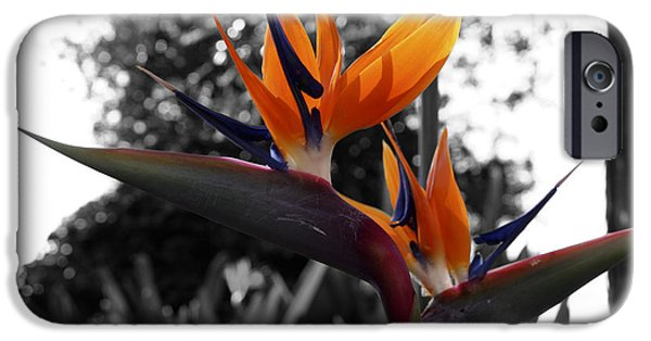 Paradise. Flower Photographs iPhone Cases - Bird of Paradise iPhone Case by Cheryl Young