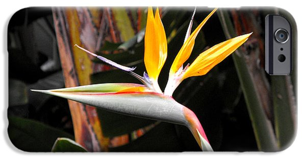 Yellow Bird Of Paradise iPhone Cases - Bird of Paradise iPhone Case by Rebecca Margraf